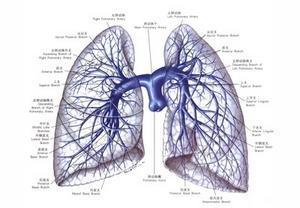 合理应用来氟米特可以避免肺损伤