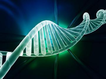 线粒体DNA损伤引发抗病毒固有免疫反应