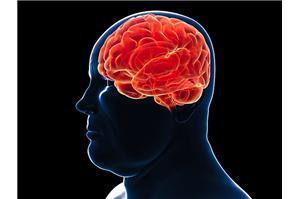 肥胖与大脑相关