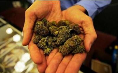 惊!大麻是毒性最轻的非法毒品